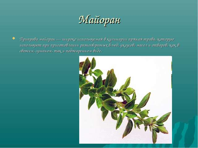 Майоран Приправа майоран — широко используемая в кулинарии пряная трава, кото...