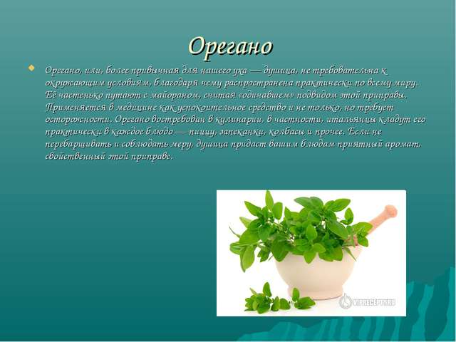 Орегано Орегано, или, более привычная для нашего уха — душица, не требователь...