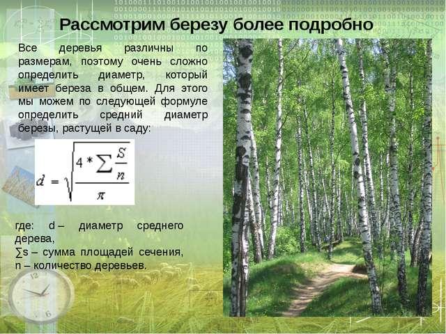 Рассмотрим березу более подробно Все деревья различны по размерам, поэтому оч...