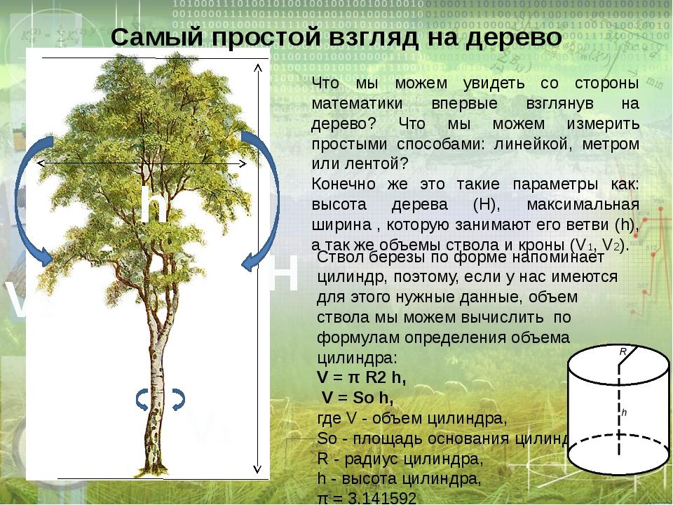 Самый простой взгляд на дерево Что мы можем увидеть со стороны математики впе...
