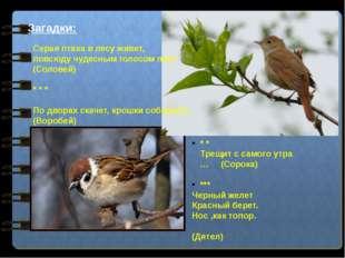 Загадки: Серая птаха в лесу живет, повсюду чудесным голосом поет. (Соловей) *
