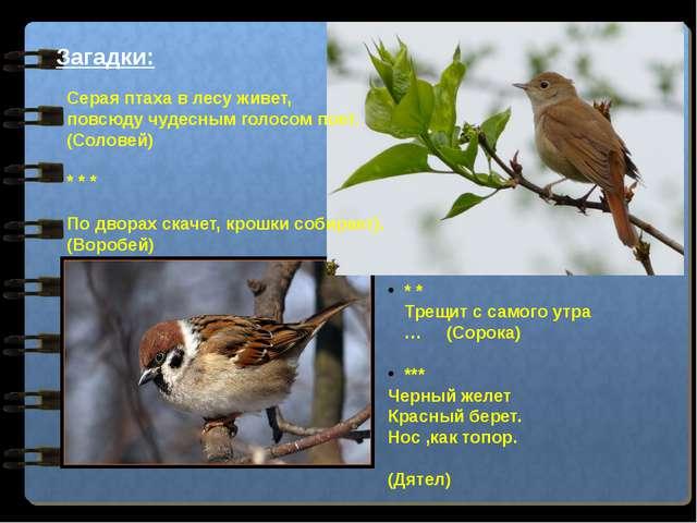 Загадки: Серая птаха в лесу живет, повсюду чудесным голосом поет. (Соловей) *...