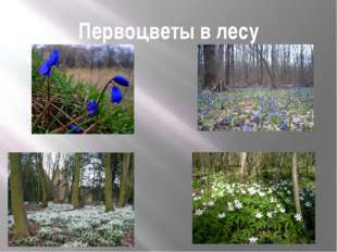 Первоцветы в лесу