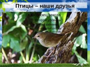 Птицы – наши друзья