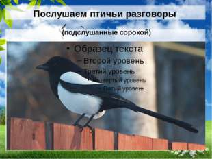 Послушаем птичьи разговоры (подслушанные сорокой)