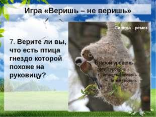 Игра «Веришь – не веришь» 7. Верите ли вы, что есть птица гнездо которой похо