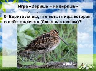 Игра «Веришь – не веришь» 9. Верите ли вы, что есть птица, которая в небе «пл