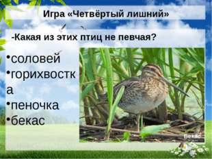 Игра «Четвёртый лишний» -Какая из этих птиц не певчая? соловей горихвостка пе