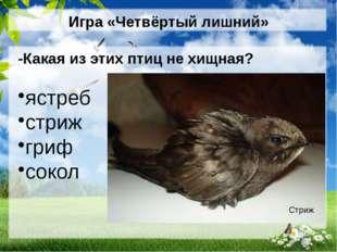 Игра «Четвёртый лишний» -Какая из этих птиц не хищная? ястреб стриж гриф соко