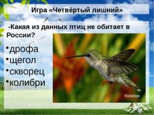 Игра «Четвёртый лишний» -Какая из данных птиц не обитает в России? дрофа щего