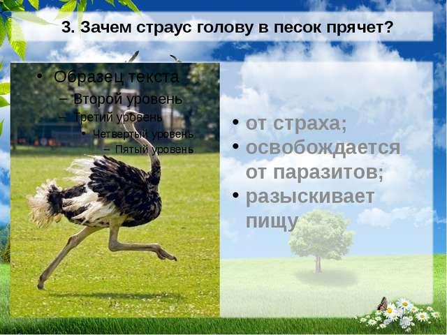 3. Зачем страус голову в песок прячет? от страха; освобождается от паразитов;...