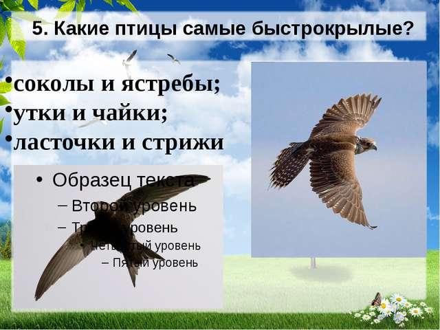 5. Какие птицы самые быстрокрылые? соколы и ястребы; утки и чайки; ласточки и...