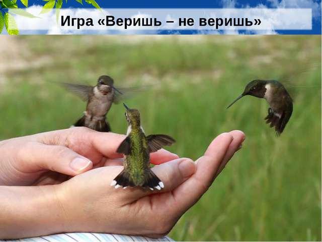 Игра «Веришь – не веришь» 5. Верите ли вы, что самая маленькая в мире птичка...