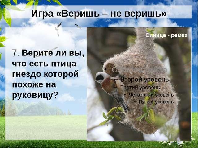 Игра «Веришь – не веришь» 7. Верите ли вы, что есть птица гнездо которой похо...