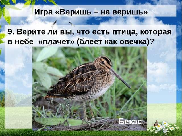 Игра «Веришь – не веришь» 9. Верите ли вы, что есть птица, которая в небе «пл...