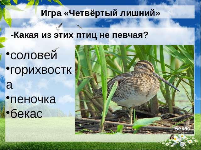 Игра «Четвёртый лишний» -Какая из этих птиц не певчая? соловей горихвостка пе...
