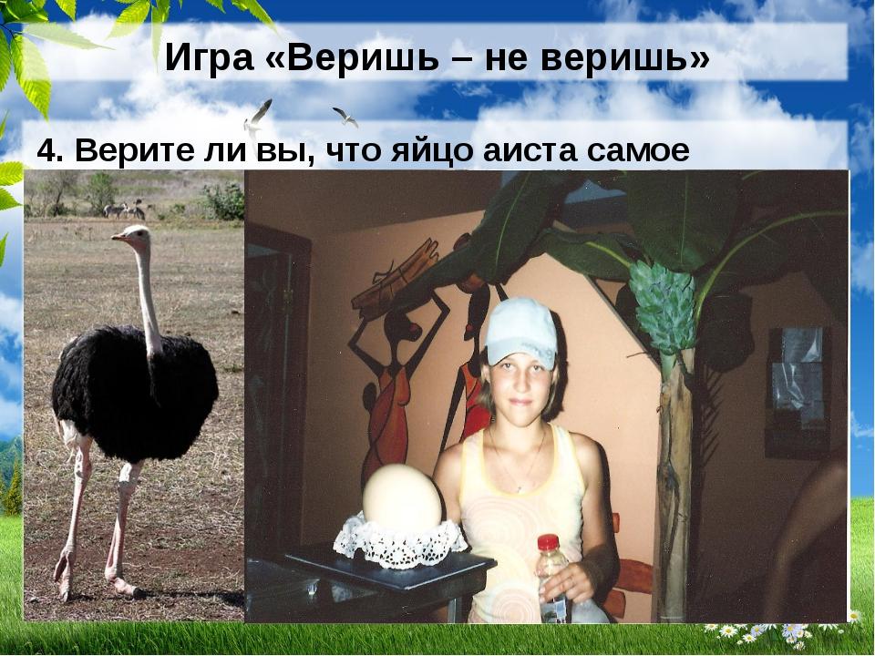 Игра «Веришь – не веришь» 4. Верите ли вы, что яйцо аиста самое крупное? (НЕТ...