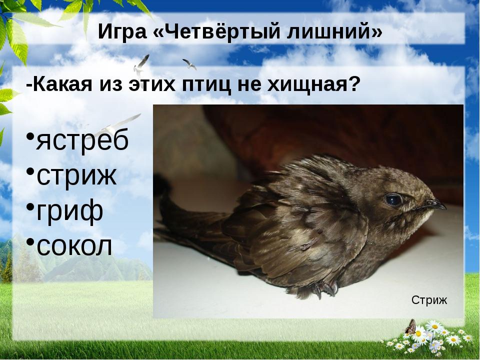 Игра «Четвёртый лишний» -Какая из этих птиц не хищная? ястреб стриж гриф соко...
