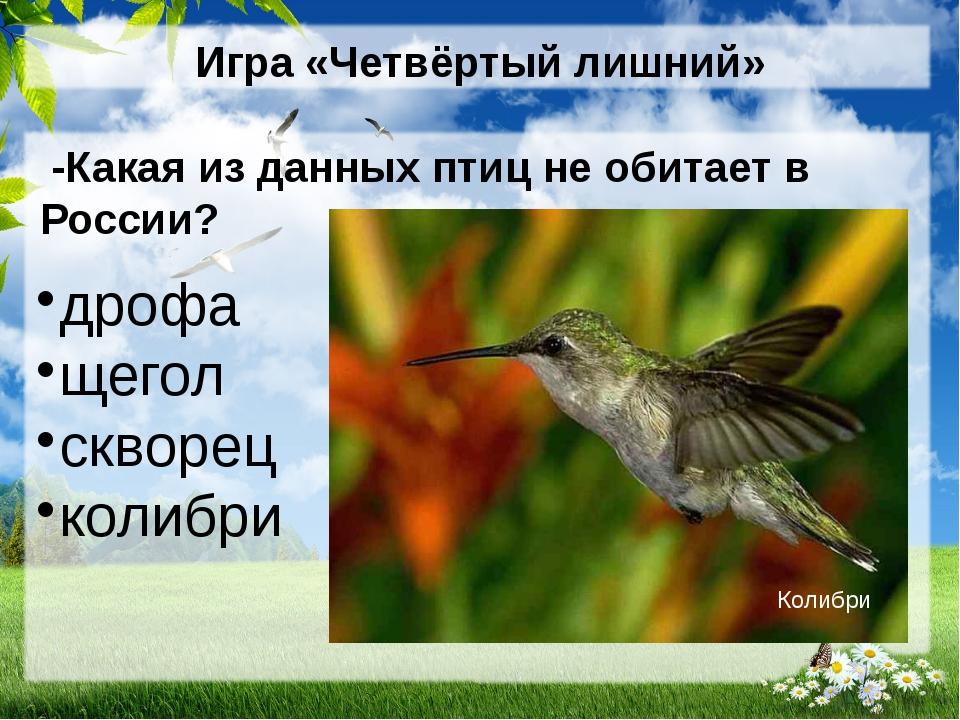 Игра «Четвёртый лишний» -Какая из данных птиц не обитает в России? дрофа щего...