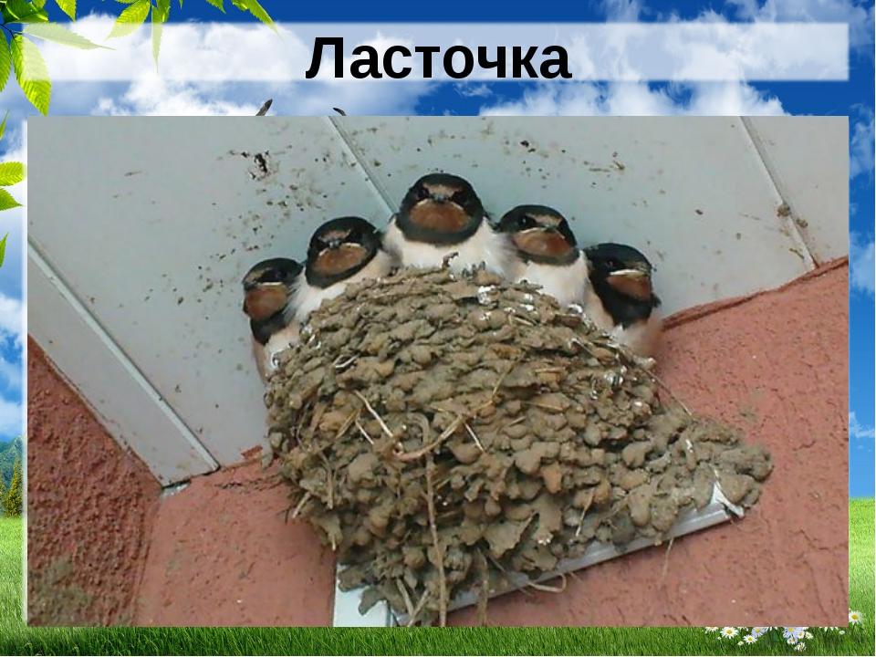 К чему ласточка вьет гнездо? - koshkinsad.ru.