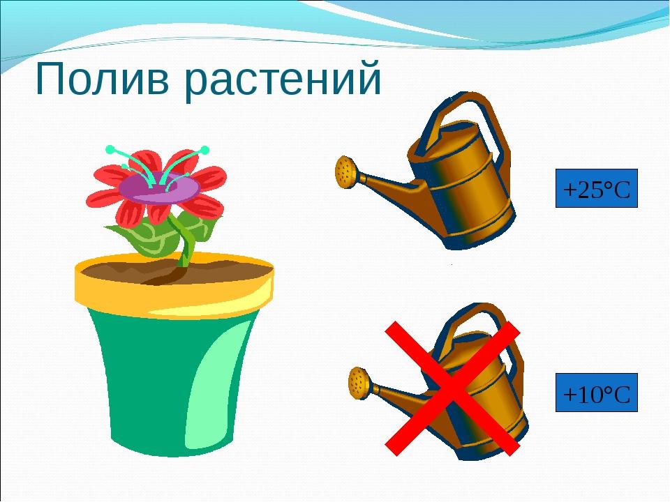 Полив растений +25°С +10°С