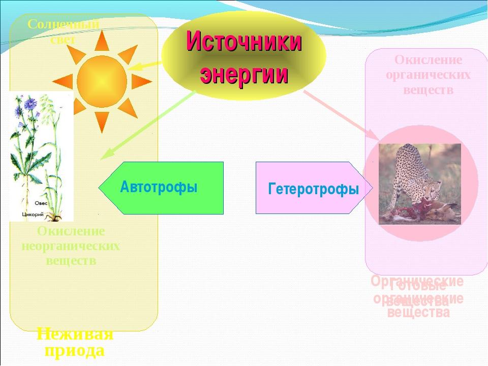 Источники энергии Органические вещества Солнечный свет Окисление неорганическ...