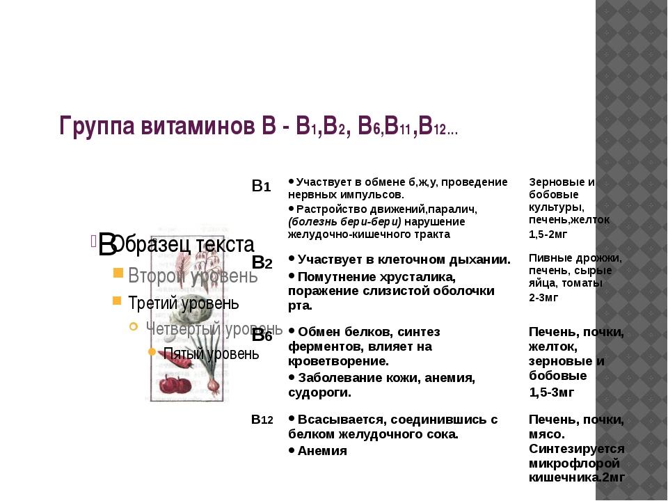 Группа витаминов В - В1,В2, В6,В11,В12… В В1 Участвует в обмене б,ж,у, провед...