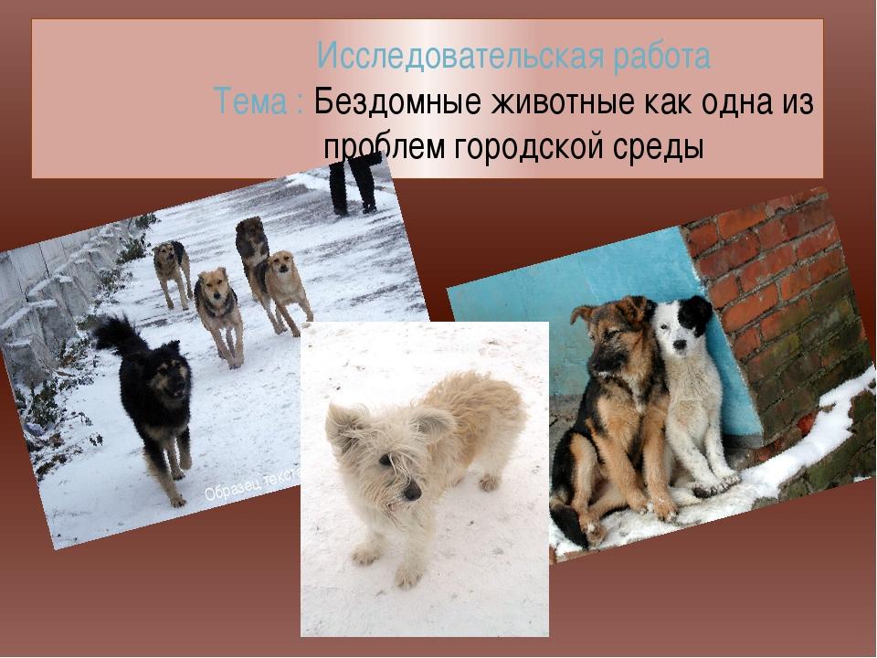 Исследовательская работа Тема : Бездомные животные как одна из проблем городс...