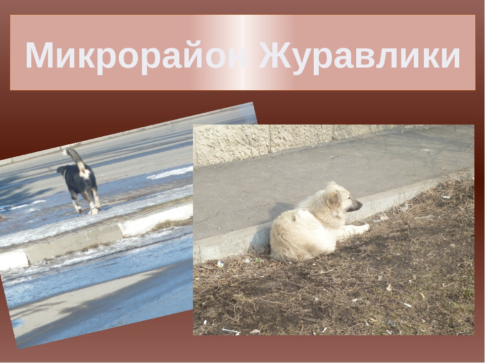 Микрорайон Журавлики