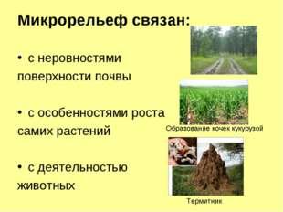Микрорельеф связан: с неровностями поверхности почвы с особенностями роста са