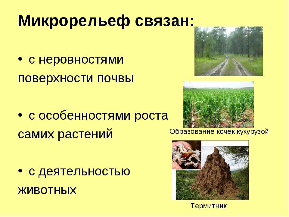 Микрорельеф связан: с неровностями поверхности почвы с особенностями роста са...