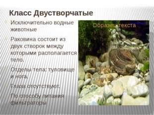 Класс Двустворчатые Исключительно водные животные Раковина состоит из двух ст