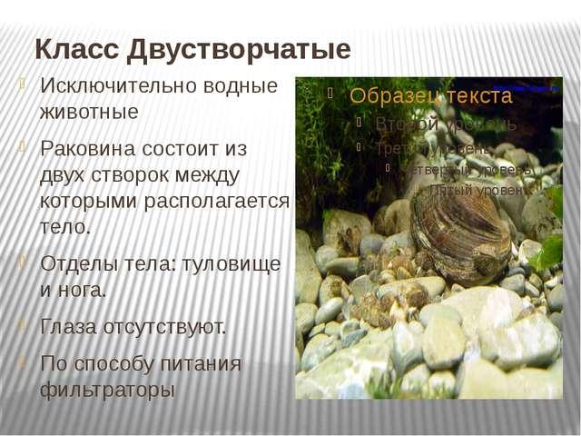 Класс Двустворчатые Исключительно водные животные Раковина состоит из двух ст...