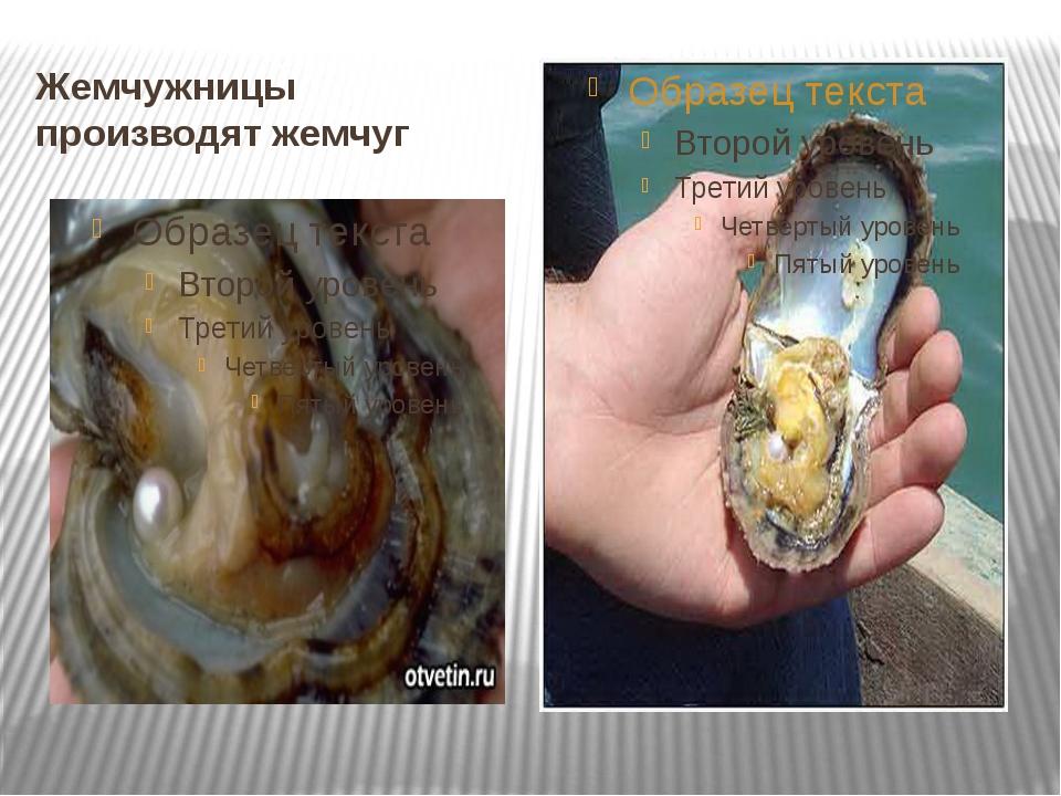 Жемчужницы производят жемчуг
