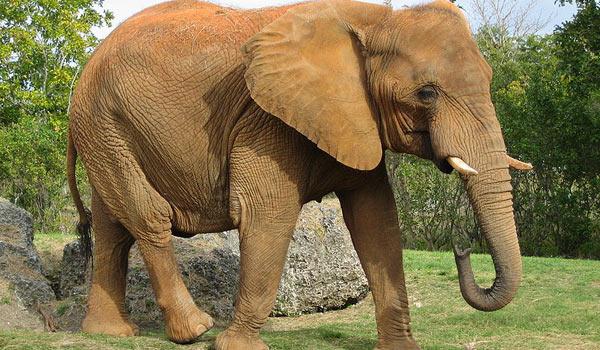 C:\Users\Динара\Desktop\где живут слоны\2211.jpg