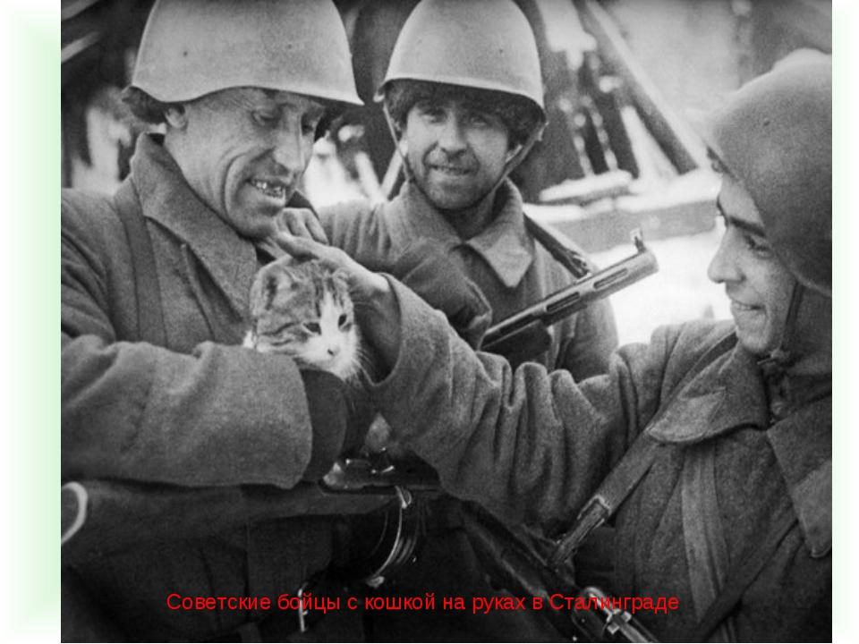 Советские бойцы с кошкой на руках в Сталинграде