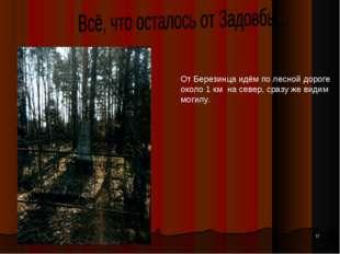 * От Березинца идём по лесной дороге около 1 км на север, сразу же видим моги
