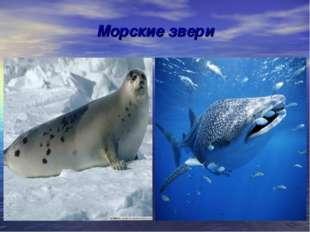 Морские звери