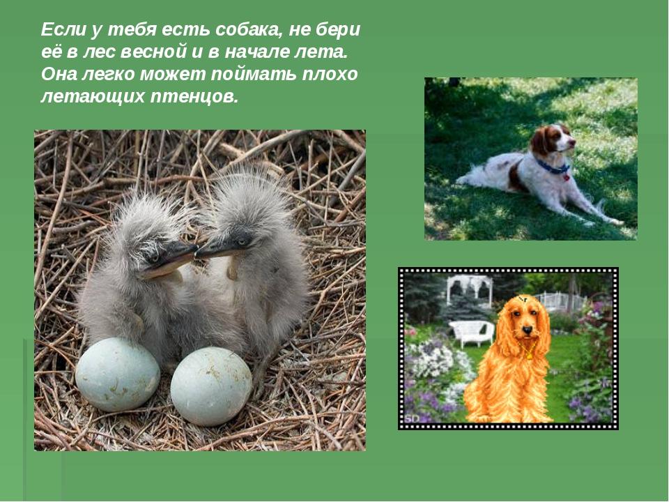 Если у тебя есть собака, не бери её в лес весной и в начале лета. Она легко м...