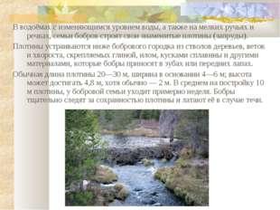В водоёмах с изменяющимся уровнем воды, а также на мелких ручьях и речках, се