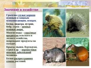 Значение в хозяйстве Грызуны служат кормом пушным и хищным млекопитающим, пти