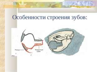 Особенности строения зубов: