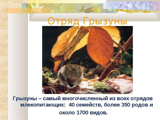 Отряд Грызуны Грызуны – самый многочисленный из всех отрядов млекопитающих: 4...