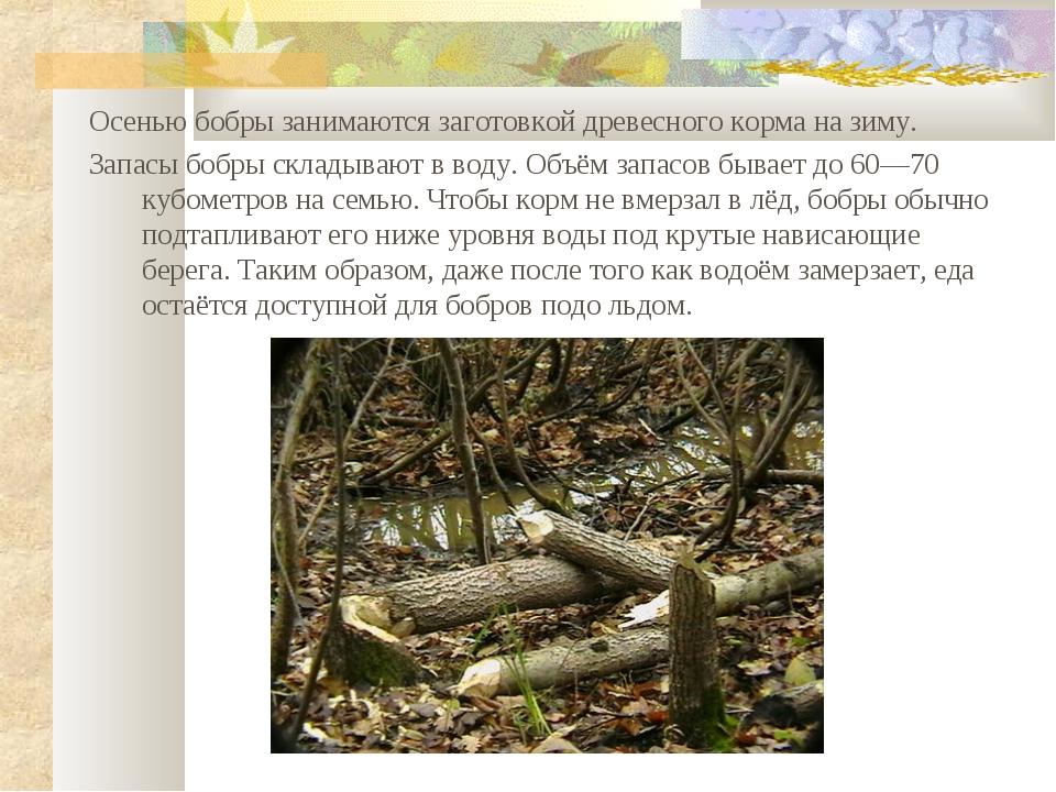 Осенью бобры занимаются заготовкой древесного корма на зиму. Запасы бобры скл...