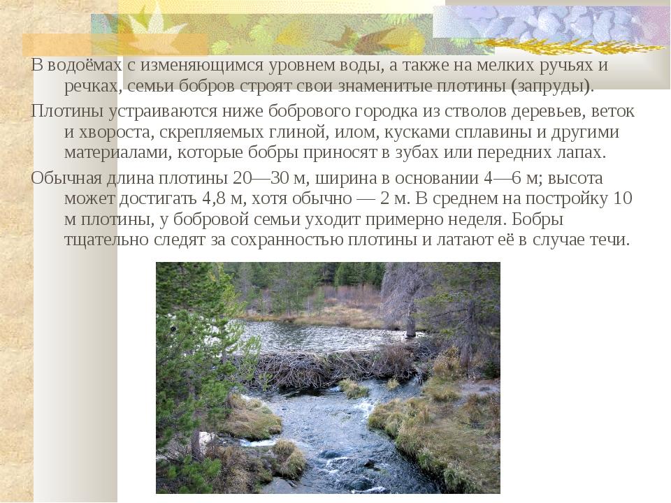 В водоёмах с изменяющимся уровнем воды, а также на мелких ручьях и речках, се...