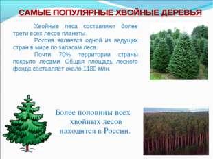 Более половины всех хвойных лесов находится в России. САМЫЕ ПОПУЛЯРНЫЕ ХВОЙНЫ