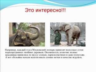 Например, каждый год в Московский зоопарк привозят несколько сотен нераспр