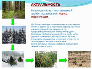 АКТУАЛЬНОСТЬ Проблема охраны и рационального использования хвойных деревьев в