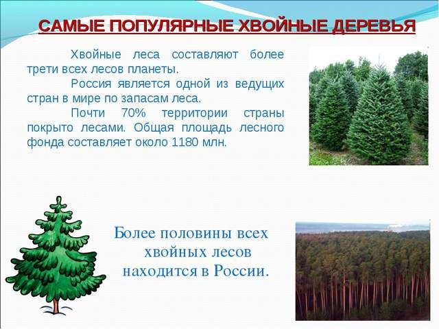 Более половины всех хвойных лесов находится в России. САМЫЕ ПОПУЛЯРНЫЕ ХВОЙНЫ...