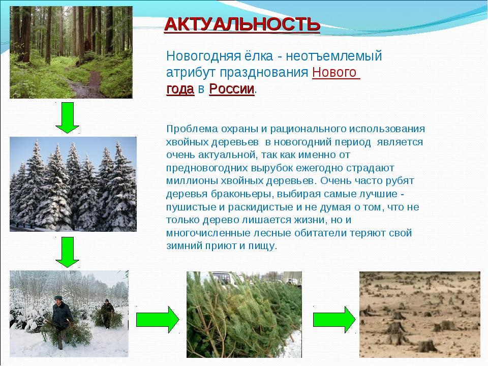 АКТУАЛЬНОСТЬ Проблема охраны и рационального использования хвойных деревьев в...